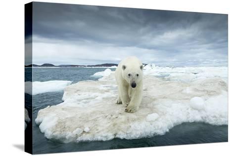 Polar Bear on Hudson Bay Pack Ice, Nunavut, Canada-Paul Souders-Stretched Canvas Print