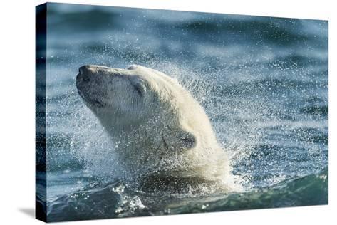Polar Bear Swimming in Hudson Bay, Nunavut, Canada-Paul Souders-Stretched Canvas Print