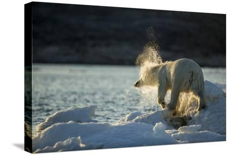 Polar Bear on Iceberg in Hudson Bay, Nunavut, Canada-Paul Souders-Stretched Canvas Print
