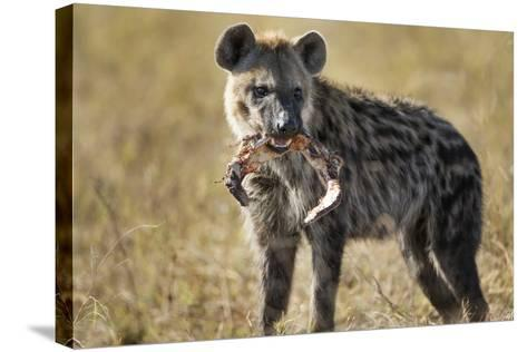 Hyena, Moremi Game Reserve, Botswana-Paul Souders-Stretched Canvas Print