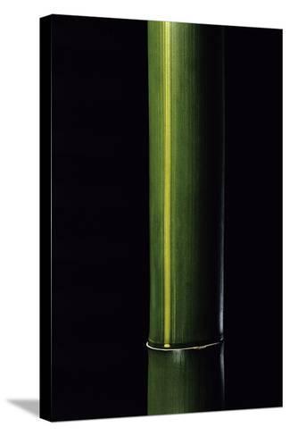 Phyllostachys Viridis 'Houzeau' (Houzeau Bamboo)-Paul Starosta-Stretched Canvas Print