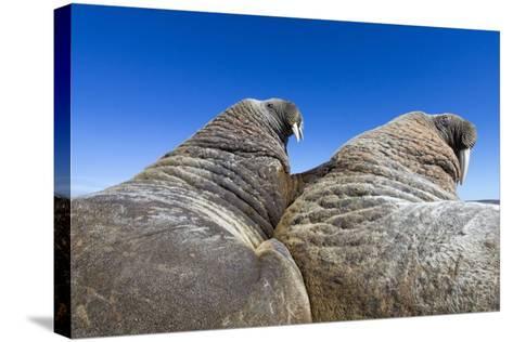 Walruses on Iceberg, Hudson Bay, Nunavut, Canada-Paul Souders-Stretched Canvas Print