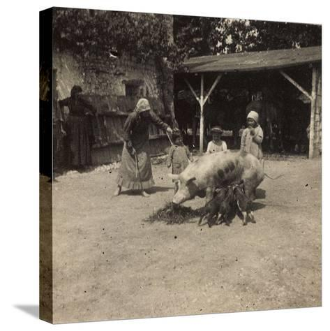 WWI: Inhabitants of Soleschiano with a Sow--Stretched Canvas Print