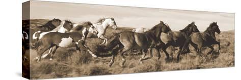 Wild Horses-Claude Steelman-Stretched Canvas Print