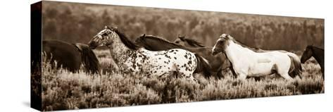 Sepia Horses-Gary Crandall-Stretched Canvas Print