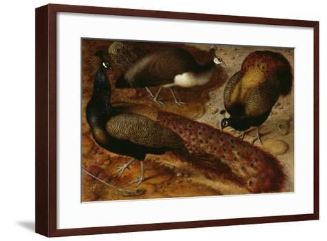 Three Peacocks, 1566-Ludger Tom Ring-Framed Art Print
