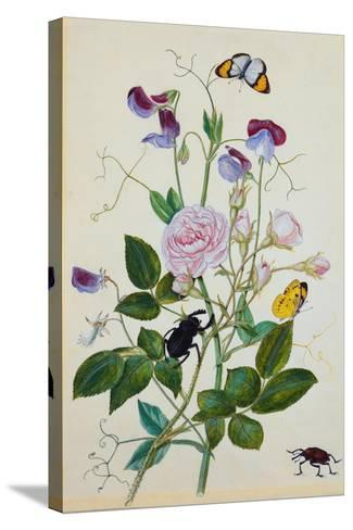 Galica Rose and Perennial Sweet Pea, Weevil, a Beetle and Butterflies-Thomas Waterman Wood-Stretched Canvas Print