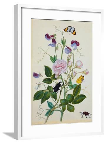 Galica Rose and Perennial Sweet Pea, Weevil, a Beetle and Butterflies-Thomas Waterman Wood-Framed Art Print