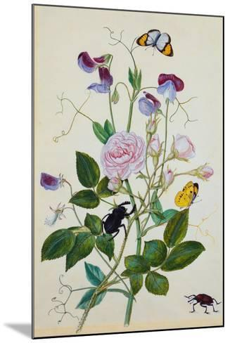Galica Rose and Perennial Sweet Pea, Weevil, a Beetle and Butterflies-Thomas Waterman Wood-Mounted Giclee Print