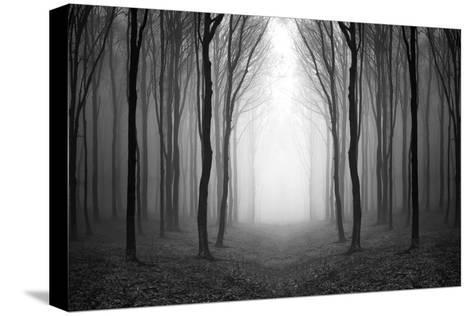 Dark Woods-PhotoINC-Stretched Canvas Print