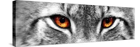 Lynx-PhotoINC-Stretched Canvas Print