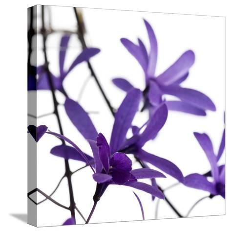 Purple Blossom--Stretched Canvas Print