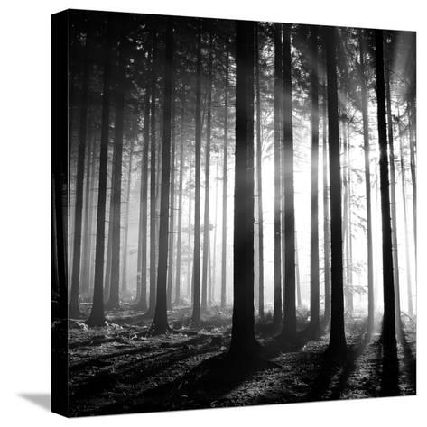 Wood Light--Stretched Canvas Print