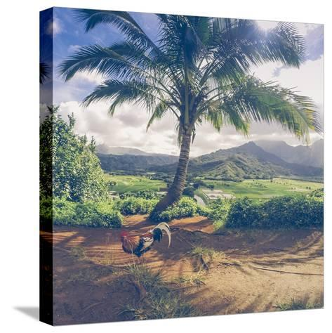 Hanalei Chicken Landscape, Kauai Hawaii-Vincent James-Stretched Canvas Print