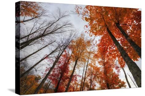 Late Autumn Tree Tops, New Hampshire-Vincent James-Stretched Canvas Print