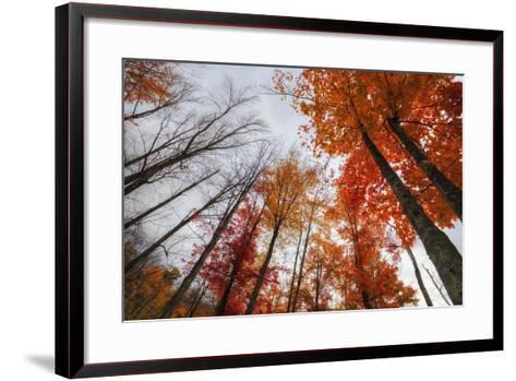 Late Autumn Tree Tops, New Hampshire-Vincent James-Framed Art Print