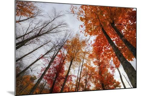 Late Autumn Tree Tops, New Hampshire-Vincent James-Mounted Photographic Print