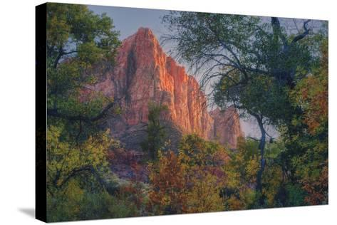Watchman and Fall Frame, Zion Southwest Utah-Vincent James-Stretched Canvas Print