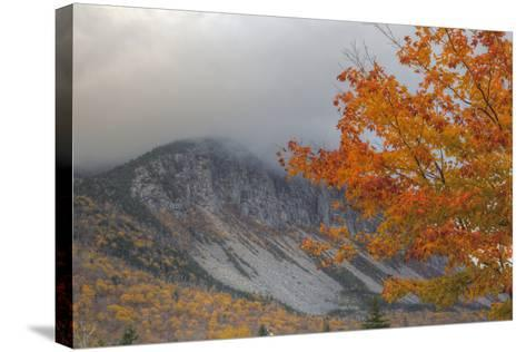 Foggy Autumn Design at White Mountain, New Hampshire-Vincent James-Stretched Canvas Print