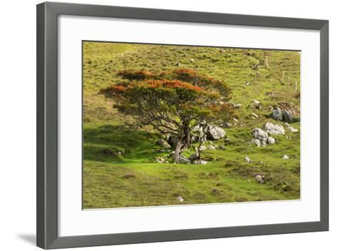Autumn Prelude-Philippe Sainte-Laudy-Framed Art Print