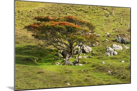 Autumn Prelude-Philippe Sainte-Laudy-Mounted Photographic Print