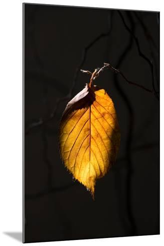 Gold Leaf-Philippe Sainte-Laudy-Mounted Photographic Print