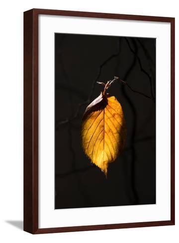 Gold Leaf-Philippe Sainte-Laudy-Framed Art Print