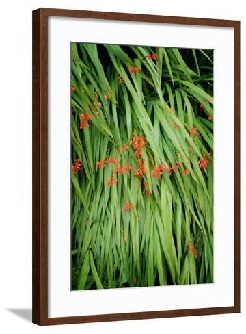 In Green-Philippe Sainte-Laudy-Framed Art Print
