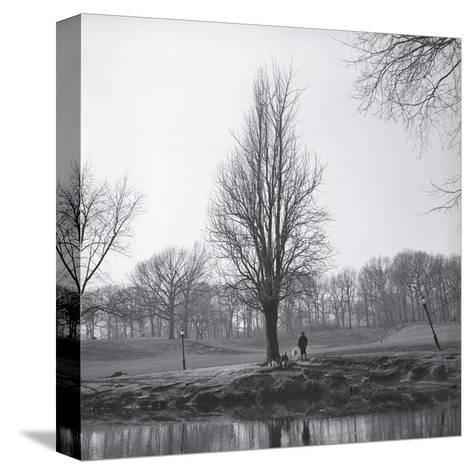 Tree in Winter with Pond-Henri Silberman-Stretched Canvas Print