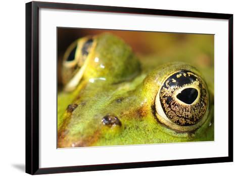 Close-Up of the Eye of a Frog in a Pond Awaiting His Prey--Framed Art Print