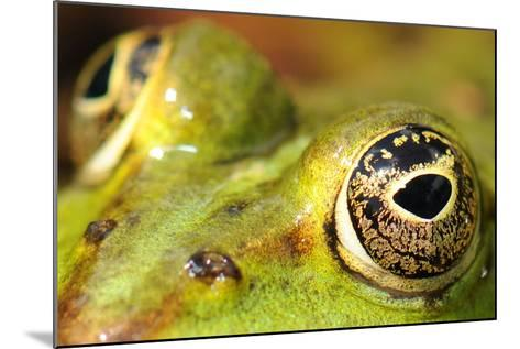 Close-Up of the Eye of a Frog in a Pond Awaiting His Prey--Mounted Photo