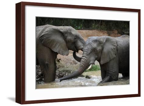 South Africa - Elephants, November 29, 2009 in Zuurberg--Framed Art Print