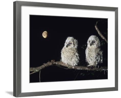 Two Owlets Perching on Tree Branch--Framed Art Print
