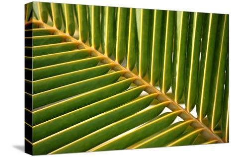 Leaf of a Palm Tree at a Beach on the Caribbean Island of Grenada-Frank May-Stretched Canvas Print