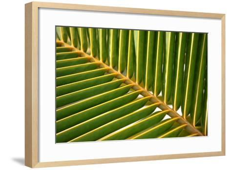 Leaf of a Palm Tree at a Beach on the Caribbean Island of Grenada-Frank May-Framed Art Print