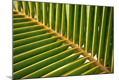 Leaf of a Palm Tree at a Beach on the Caribbean Island of Grenada-Frank May-Mounted Photo