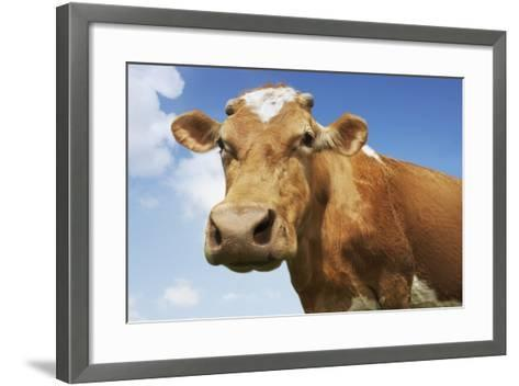 Close-Up Low Angle View of Brown Cow Against Blue Sky--Framed Art Print