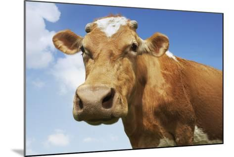 Close-Up Low Angle View of Brown Cow Against Blue Sky--Mounted Photo