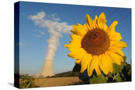 Sunflower, in Front of a Nuclear Power Plant--Stretched Canvas Print