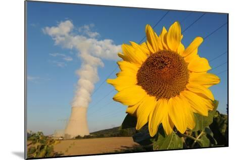 Sunflower, in Front of a Nuclear Power Plant--Mounted Photo