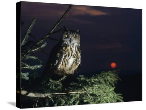 Eagle Owl Perching on Tree Branch--Stretched Canvas Print