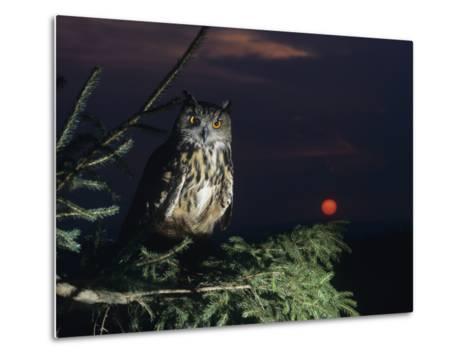 Eagle Owl Perching on Tree Branch--Metal Print