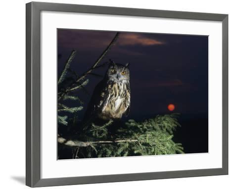 Eagle Owl Perching on Tree Branch--Framed Art Print