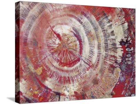 Petrified Wood, Close-Up--Stretched Canvas Print
