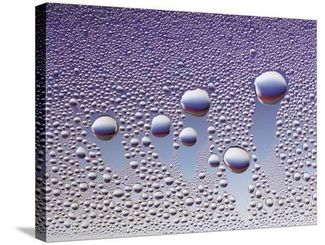 Water Droplets--Stretched Canvas Print