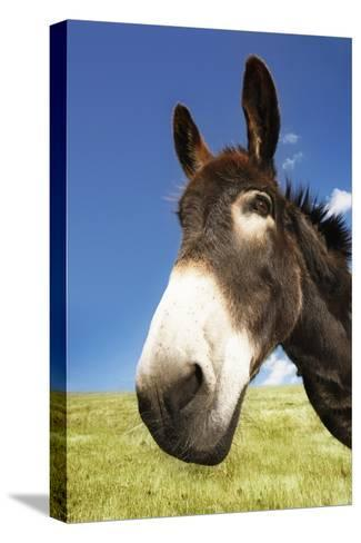 Donkey in Green Field, Close-Up of Head--Stretched Canvas Print