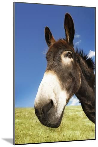 Donkey in Green Field, Close-Up of Head--Mounted Photo