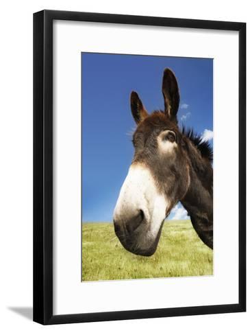 Donkey in Green Field, Close-Up of Head--Framed Art Print