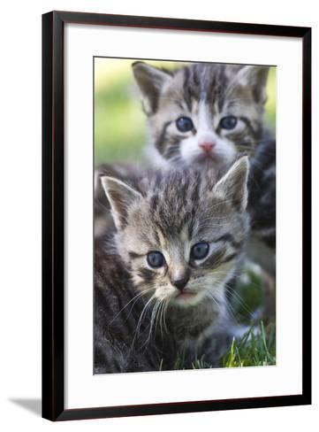 Kittens Sitting in the Grass--Framed Art Print