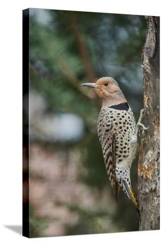Flicker-Gary Carter-Stretched Canvas Print